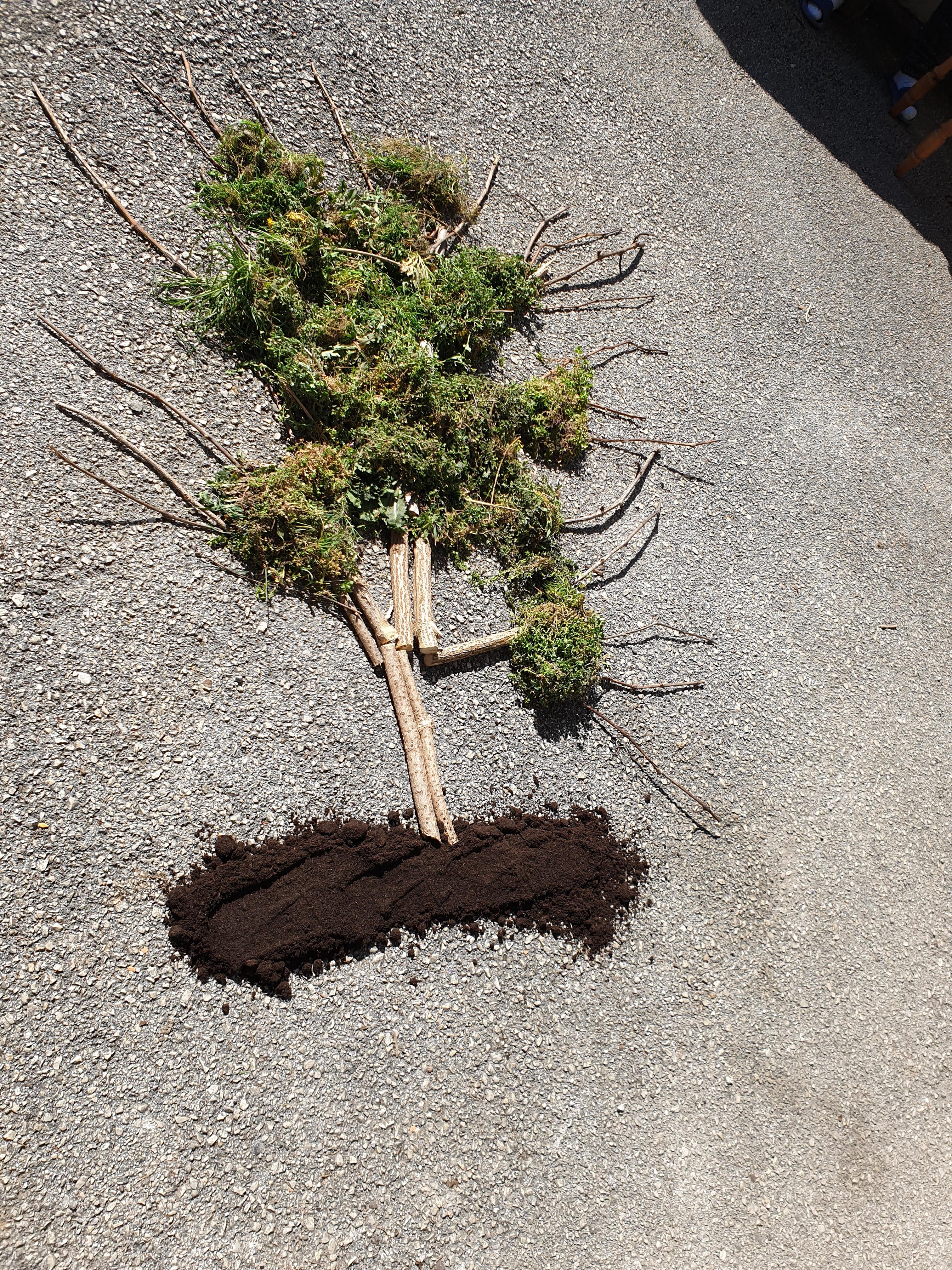 lovro-drevo